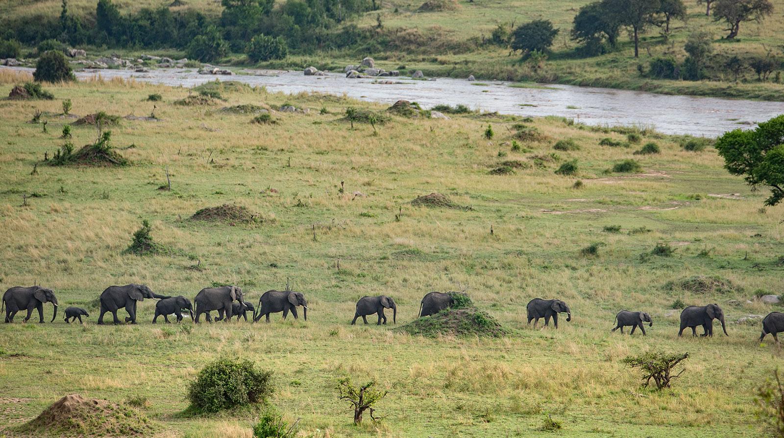 Mara River Post - Tanzania
